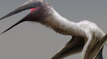 Pterossauro gigante, apelidado de 'dragão congelado', encontrado no Canadá