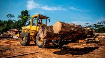 Destruição de florestas 'irá desencadear mais pandemias'