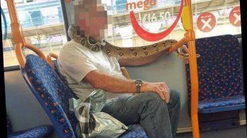 Homem usa cobra viva como máscara facial em ônibus do Reino Unido